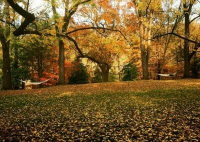 Fall Leaves in Hot Springs NC
